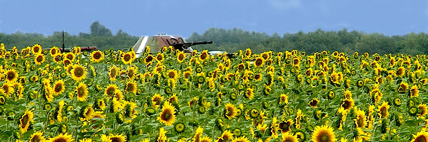 header_tank-and-sunflowers-good
